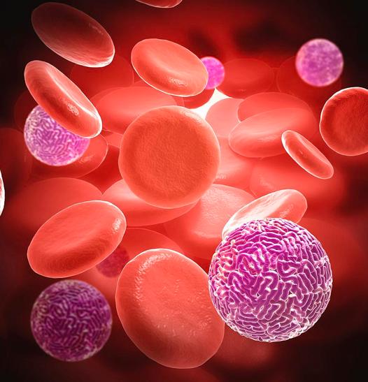 Análise Nutricional do Sangue em Boca Raton